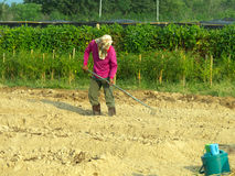 A man cultivating in farm. A man scarify the soil in plantation amidst the strong sunlight Stock Image
