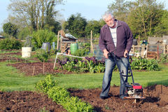 Man cultivating garden. Stock Image