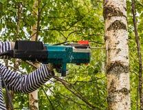Man cut away fresh birch Royalty Free Stock Images
