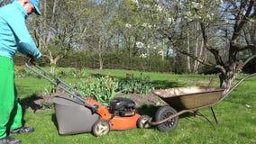 Man cut mow lawn cutter mower put grass into rusty barrow. 4K stock video