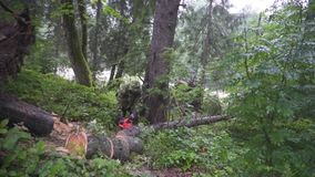 Man cut tree chainsaw. FullHD stock footage