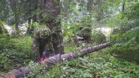Man cut tree chainsaw. FullHD stock video footage