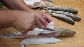 The man cut up the fish. With a knife. Hands and fish close-up stock video footage