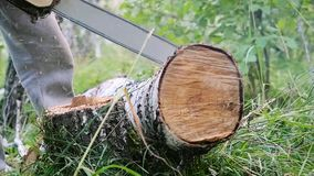 Man cuts away fresh birch in the forest, using electric chainsaws in slowmotion. 1920x1080. hd stock video footage