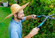 Man cuts bushes. With clippers near the house Stock Image