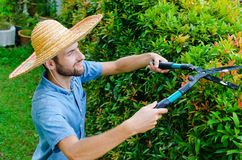 Man cuts bushes. With clippers near the house Stock Images