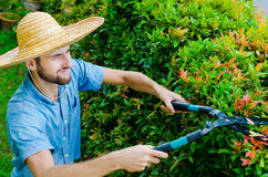 Man cuts bushes. With clippers near the house Royalty Free Stock Photo