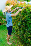 Man cuts bushes. With clippers near the house Stock Photos
