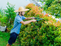 Man cuts bushes. With clippers near the house Royalty Free Stock Image