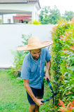 Man cuts bushes. With clippers near the house Royalty Free Stock Images