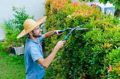 Man cuts bushes. With clippers near the house Royalty Free Stock Photos