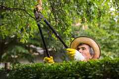Man cuts bushes with clippers Royalty Free Stock Images