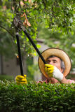 Man cuts bushes with clippers Royalty Free Stock Image