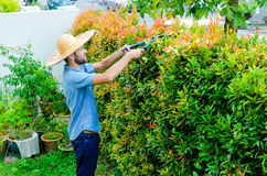 Man cuts bushes. With clippers near the house Royalty Free Stock Photography