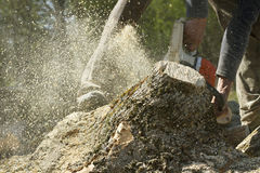 Man cuts a fallen tree. Royalty Free Stock Images