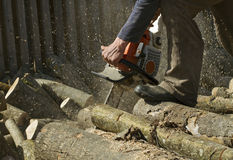 Man cuts a fallen tree. Royalty Free Stock Photography