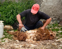 Man cuts fleece Royalty Free Stock Image