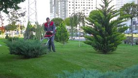 Man cuts grass on lawn with help lawn mower and prepares streets of city for spring stock video
