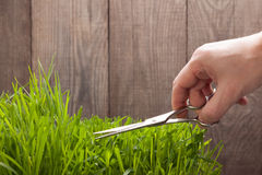 Man cuts grass for lawn with scissors, fresh cut lawn.  Royalty Free Stock Images