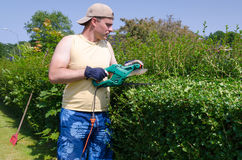 Man cuts home hedge Royalty Free Stock Photo