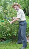 Man cuts off the bushes in the garden Stock Photography