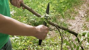 Man cuts saws tree branch in green summer forest. Man cuts and saws tree branch with knife in green summer forest. Green environment outdoor concept stock video footage
