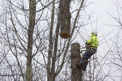 Man cuting tree. Man cuts tree with the assistance of a crane to hold the log Stock Photos