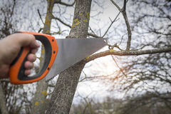 Man cuts tree branches sawing. Royalty Free Stock Photo