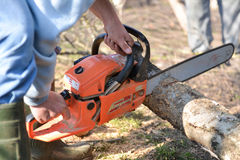 Man cuts tree with chainsaw, concept of deforestation Stock Image