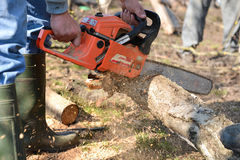 Man cuts tree with chainsaw, concept of deforestation Stock Images