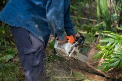 Man cuts tree felling tree with chainsaw. Occupation cut tree.  stock image