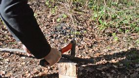 Man Cuts Wooden Stick With An Ax. Close-up man`s hands cut wooden stick with an ax on the hive in forest. Cutting edge. Falling autumn leaves in background stock video