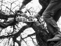 Man Cutting Apple Tree Stock Image