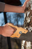 Man cutting the branch of a tree with saw Royalty Free Stock Image