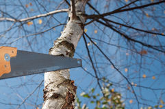 Man cutting the branch of a tree with saw Royalty Free Stock Photo