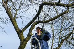 Man cutting a branch of withered tree. Royalty Free Stock Photography