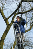 Man cutting a branch of withered tree. Royalty Free Stock Photo