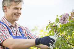 Man cutting branches at garden Stock Images