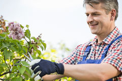 Man cutting branches at garden Royalty Free Stock Photo