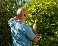 Man cutting  bush Royalty Free Stock Image