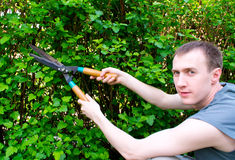 Man are cutting bush clippers. Young man are cutting bush clippers Stock Photo