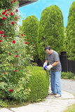 Man cutting bushes in the garden Stock Images