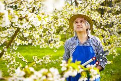 Man cutting cherry tree hat Royalty Free Stock Photo
