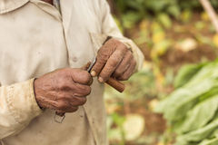Man cutting a cigar with Cuba's traditional knife Royalty Free Stock Image