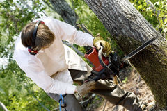 Man cutting down a tree. With a chainsaw royalty free stock photography