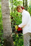 Man cutting down a tree Stock Photos
