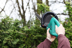 A man cutting a hedge. Stock Photography