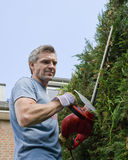 Man cutting a hedge Stock Photography