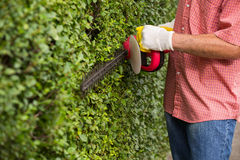 Man cutting a hedge with a hedge cutter Stock Image