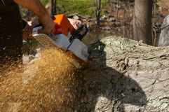 Man Cutting Log Stock Images